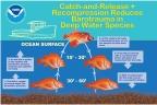 NOAA Barotrauma Infographic