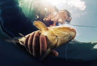 Fish Handling